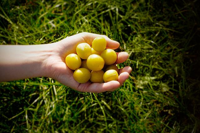 Voir les enfants se gaver de petits fruits à même la cour arrière. De sa... (Photo : Écomestible Inc)
