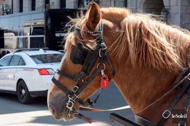 Alors que la Ville de Montréal a annoncé qu'elle interdirait les calèches dès... (PHOTO ÉRICK LABBÉ, ARCHIVES LE SOLEIL)