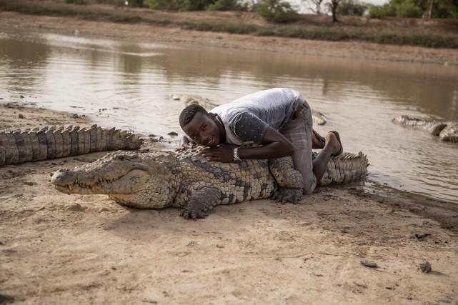 Nourris par la population locale, ces reptiles sont... (Photo Olympia de Maismont, Agence France-Presse)