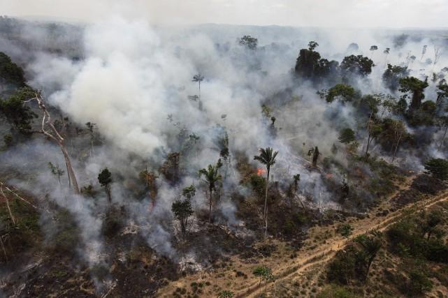 Les pertes au Brésil, où se trouve la... (Photo Andre Penner, archives Associated Press)
