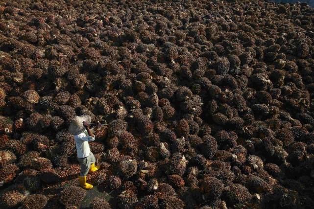 Première huile végétale consommée dans le monde, l'huile... (Photo Samsul Said, archives Reuters)