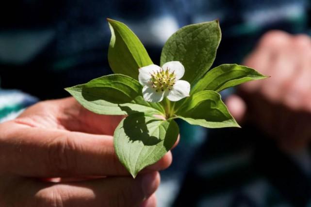 Cet été, la Forêt Montmorency tient quatre activités... (Photo fournie par la Forêt Montmorency)