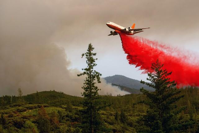 Le feu faisait rage samedi dans la forêt... (Photo NOAH BERGER, Agence France-Presse)
