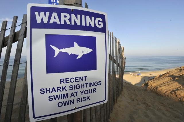 Si l'homme attaqué par un requin ne se... (photo Merrily Cassidy, The Cape Cod Times, via archives AP)