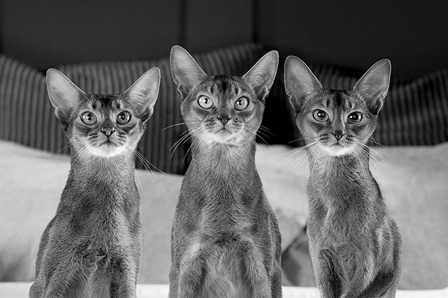 Si vous avez un chien ou un chat, il y a de fortes chances que vous connaissiez...