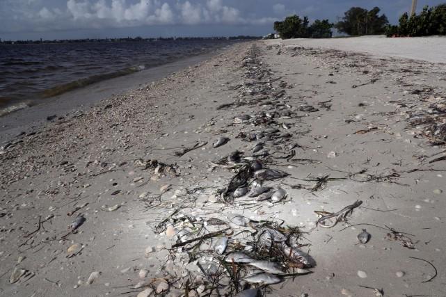 Des dizaines de dauphins et des centaines de phoques se sont échoués ces deux... (Andrew West, The News-Press)