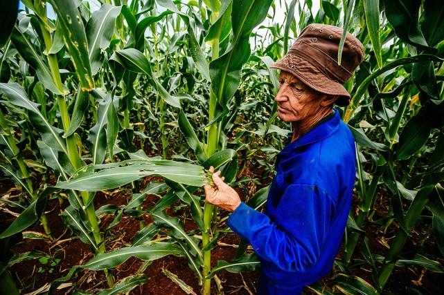 Sur cette photo, un fermier constate les dommages... (Waldo Swiegers, archives Bloomberg)