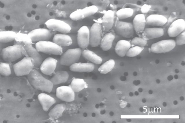 Le trioxyde d'arsenic, le principe actif de son... (Photo archives Reuters)