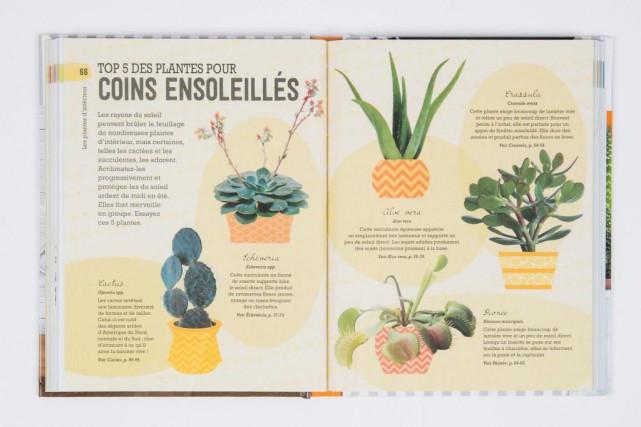 Avis à ceux qui font mourir toutes les plantes, même les plus coriaces, ce... (Photo Marco Campanozzi, La Presse)