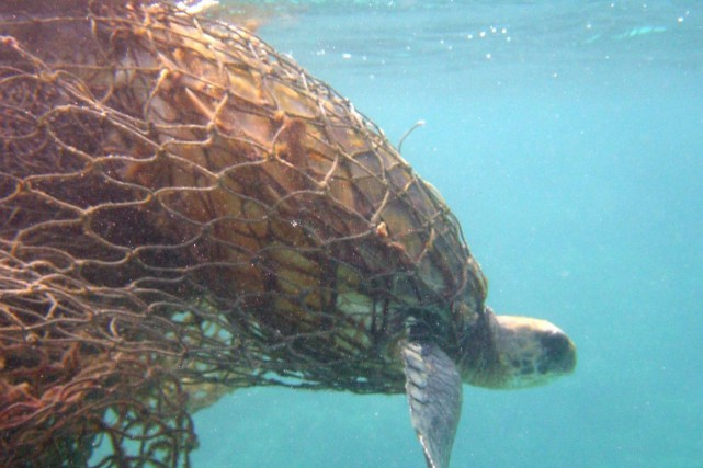 L'équipement de pêche abandonné dans l'eau passe trop... (Photo National Oceanic, Jacob Asher, via AP)