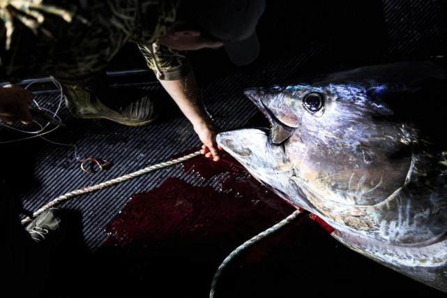 Au Québec, 53 pêcheurs de la Gaspésie et... (Photo Edouard Plante-Fréchette, Archives La Presse)