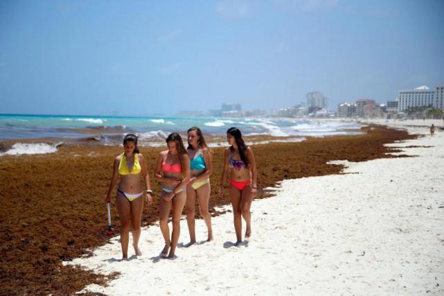 La présence d'algues sargasses exhalant une odeur d'oeuf... (Photo Israel Leal, Archives Associated Press)