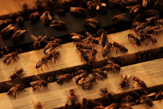 Les abeilles font partie de notre quotidien bien plus qu'on pourrait le croire....