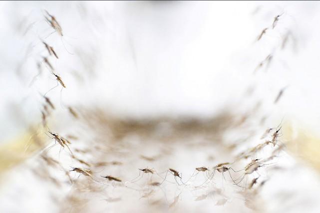 Le paludisme, transmis par des moustiques infectés, est... (Photo Athit Perawongmetha, archives REUTERS)