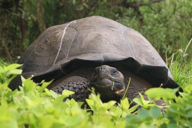 En 2015, l'Équateur avait annoncé la découverte d'une... (ARCHIVES AP)