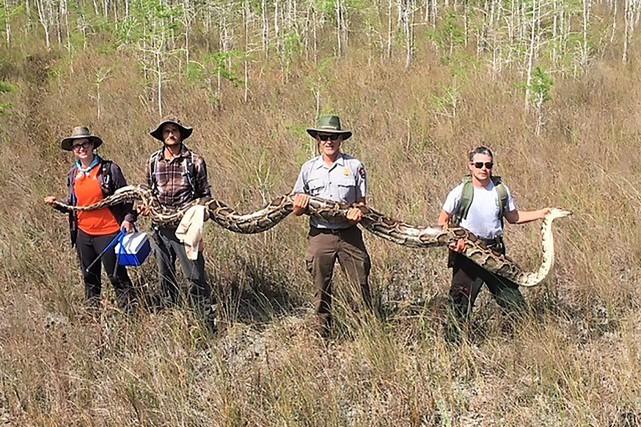 Selon la réserve nationale de Big Cypress, qui... (PHOTO AGENCE FRANCE-PRESSE)