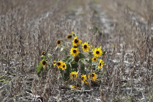Si le mot «biodiversité» semble parfois bien abstrait,... (PHOTO MARTIN CHAMBERLAND, ARCHIVES LA PRESSE)