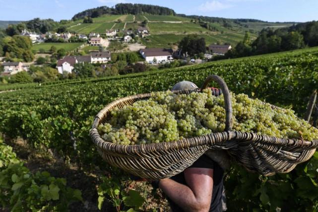 De plus en plus de vignobles en Bourgogne... (PHOTO PHILIPPE DESMAZES, ARCHIVES AGENCE FRANCE-PRESSE)