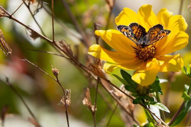 Selon Cristiana Pașca Palmer, la perte de biodiversité... (PHOTO GETTY IMAGES)