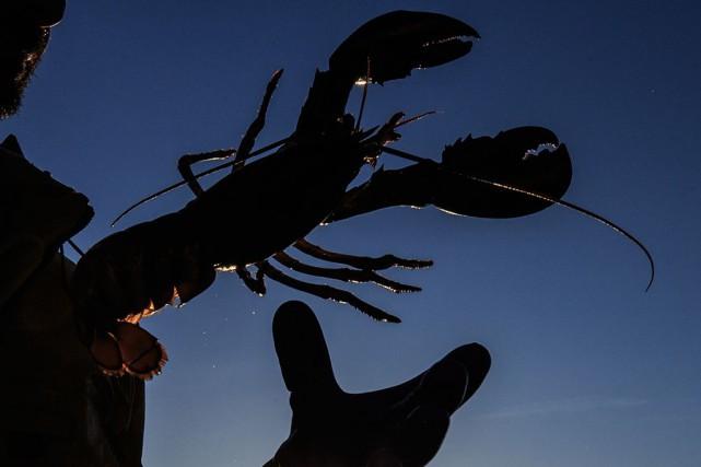 La saison du homard 2019 s'annonce excellente. Le... (PHOTO ÉDOUARD PLANTE-FRÉCHETTE)