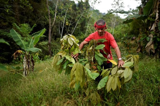 Les fonds serviront «combler des brèches» dans l'accès... (PHOTO LUIS ROBAYO, ARCHIVES AGENCE FRANCE-PRESSE)