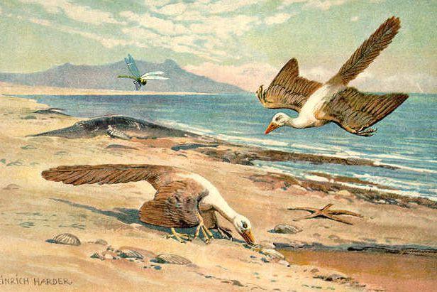 Découvert en 1861, l'Archéoptéryx était un petit dinosaure... (WIKICOMMONS)
