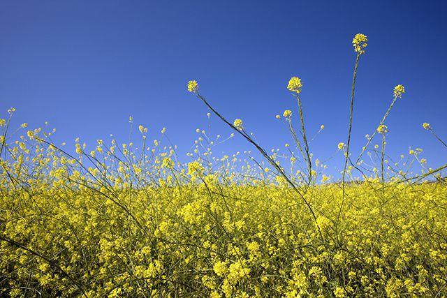 Les allergies saisonnières peuvent nous empoisonner la vie. Yeux qui enflent,...