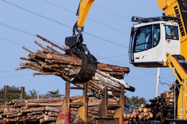Comme ce n'est pas le bois qui manque... (PHOTO ALAIN ROBERGE, ARCHIVES LA PRESSE)