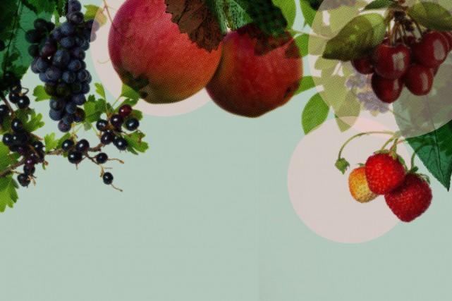 Cultiver des fruits chez soi permet de se faire plaisir, avec des variétés... (PHOTOMONTAGE LA PRESSE)