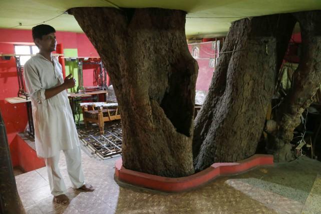 L'arbre centenaire est désormais le trait caractéristique de... (PHOTO UMA SHANKAR MISHRA, AGENCE FRANCE-PRESSE)