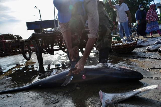 L'importation et l'exportation d'ailerons de requin qui ne... (PHOTO CHAIDEER MAHYUDDIN, AGENCE FRANCE-PRESSE)