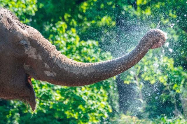 Près de 70 éléphants ont été tués par... (PHOTO AFP)