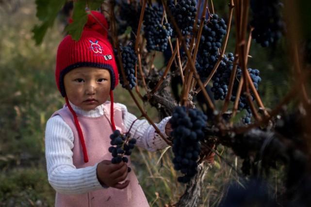 Barons de Rothschild ajoutera à l'automne des vins... (PHOTOFRED DUFOUR, ARCHIVES AGENCE FRANCE-PRESSE)