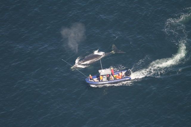 Les opérations de recherche et de sauvetage impliquent... (PHOTO ALISON OGILVIE, LA PRESSE CANADIENNE)