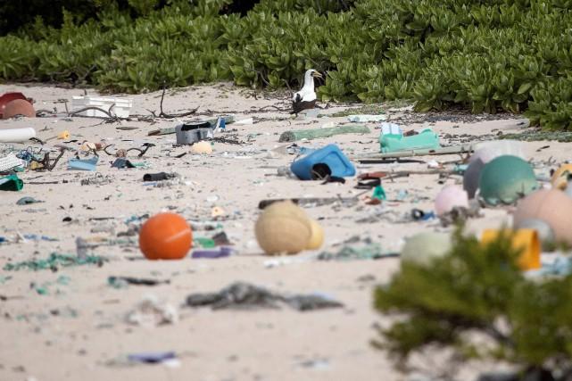 C'est pour son «écologie pratiquement intacte» que l'île Henderson, atoll... (PHOTO IAIN MCGREGOR, ARCHIVES AGENCE FRANCE-PRESSE)