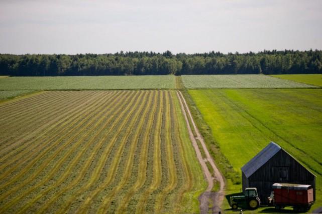 Des chercheurs finlandais ont montré qu'en saupoudrant de... (PHOTO DAVIDBOILY, ARCHIVES LA PRESSE)