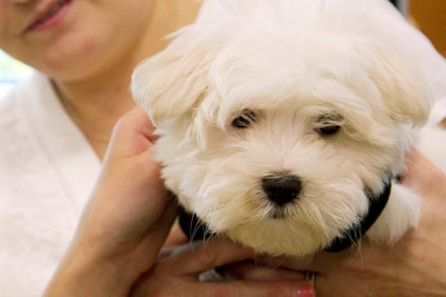 Posséder un chien prolongerait la vie, selon une étude