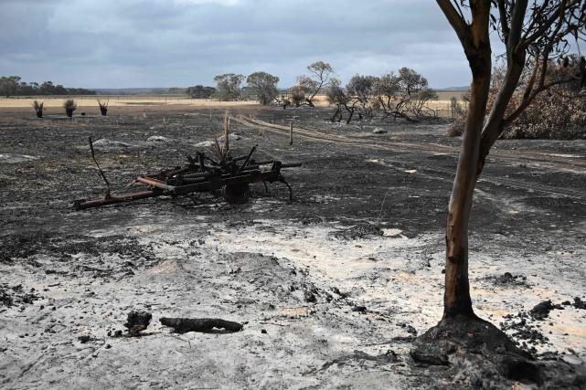Incendies en Australie: les agriculteurs comptent leurs pertes