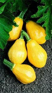La courge d'été «Papaya Pear»...