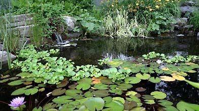 Un jardin d'eau offre un murmure apaisant à...