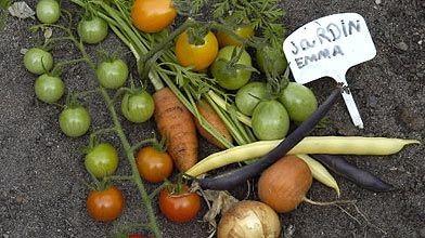 Une partie de la récolte du potager d'Emma....