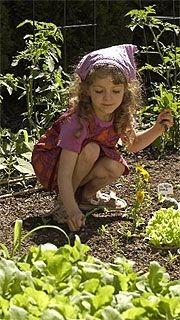Le jardin d'Emma fait des petits. À vrai dire, l'expérience potagère que je...