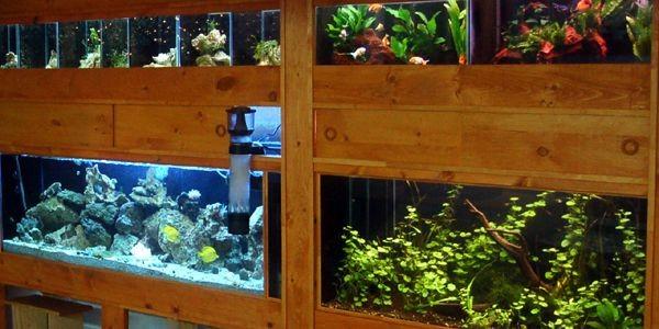 Aquaponic conçoit des paysages aquatiques inspirés de la... (Photo Le Soleil)