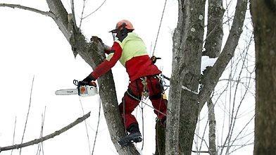 Alain Planchamp, entrepreneur forestier, prend un soin jaloux...