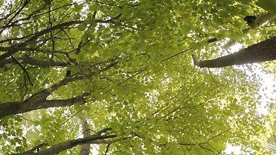 Les arbres situés à la limite de deux...