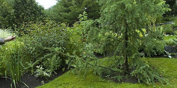 La branche inusitée produite par le porte-greffe à... (Photo : Rémie Lemée, La Presse)