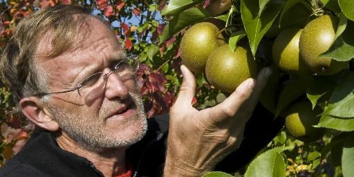 Dans sa ferme, à L'Île-Perrot, Ken Taylor cultive... (Photo Rémi Lemée, La Presse)