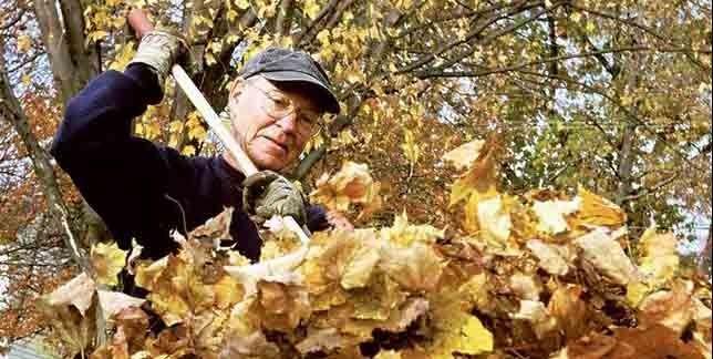 Il est particulièrement important de ramasser les feuilles... (Photothèque Le Soleil)