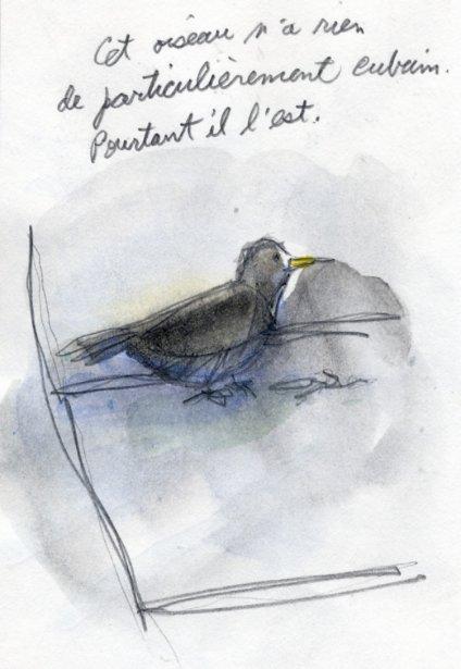En apparence, il n'a rien qui le distingue de nos oiseaux mais son chant est très beau. | 1 mars 2011