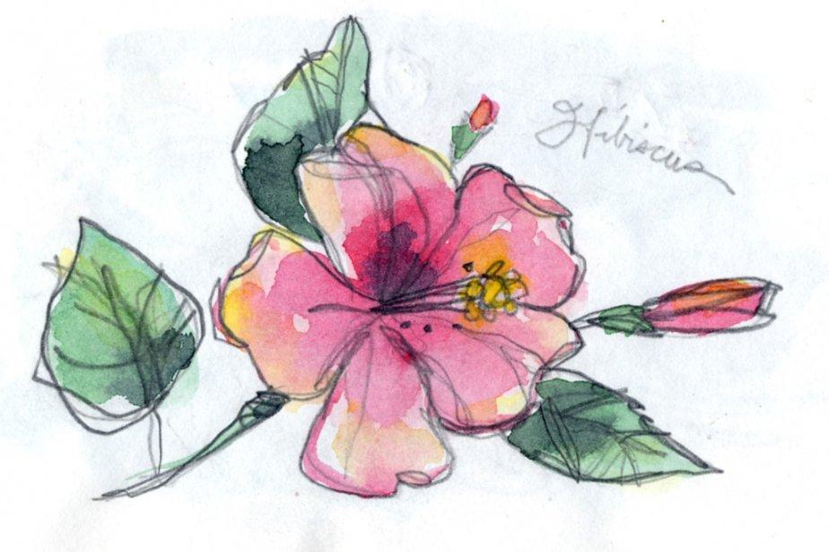 Pas la peine de se donner beaucoup de mal pour faire pousser des bosquets d'hibiscus à Cuba, il y en a partout. | 1 mars 2011